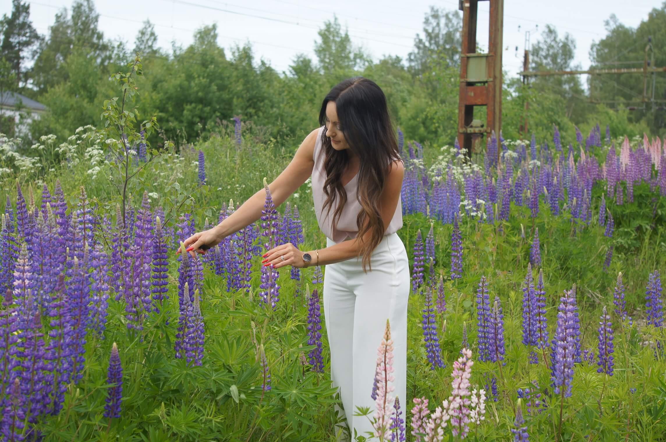 lupiner, dikesblommor, horndal, jobbresa, hav av blommor